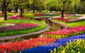 Colorful-Garden-Flowers-hd-free-wallpapers